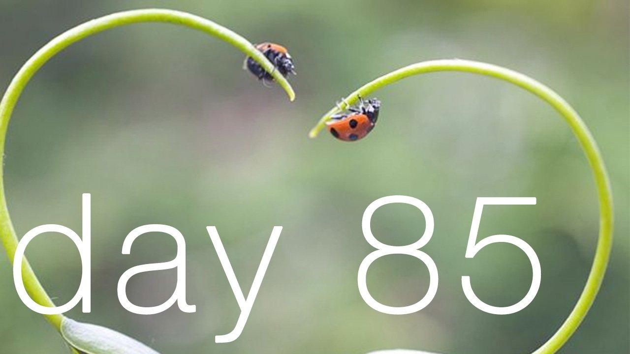 Day 85 - Love