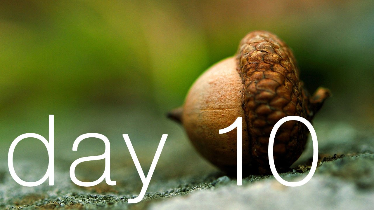 Day 10 - You're An Acorn