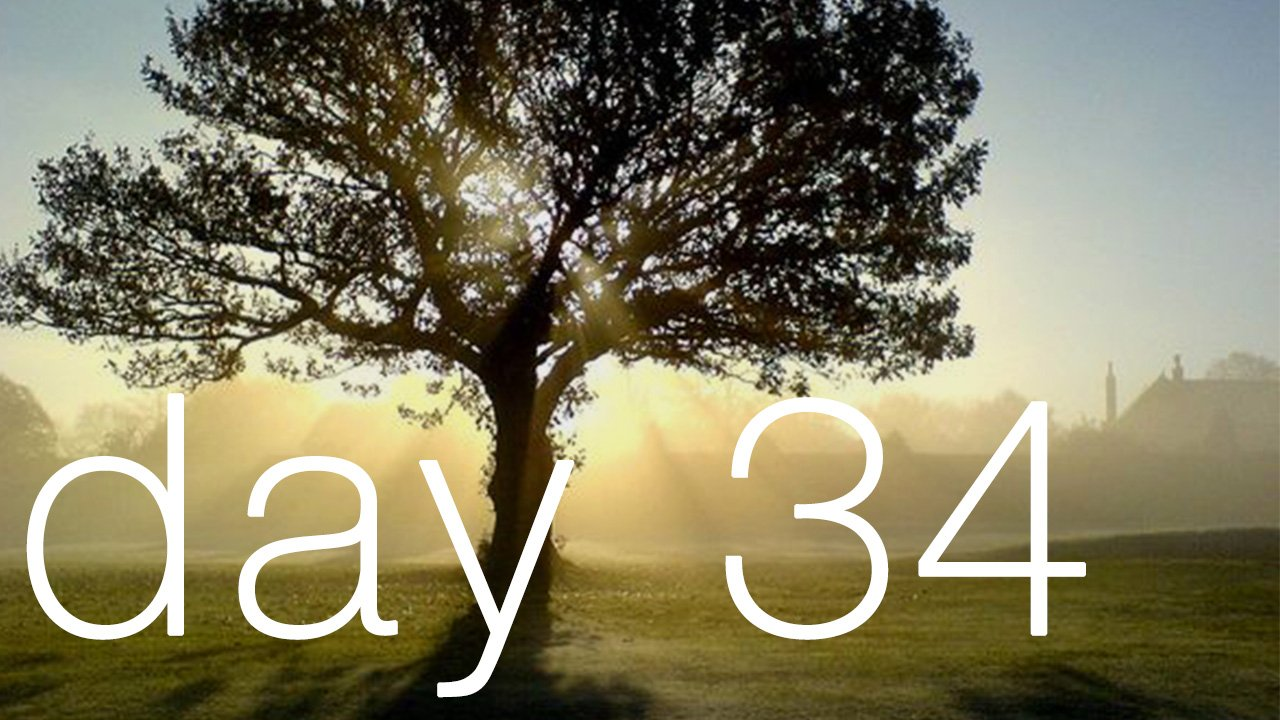 Day 34 - Stop Being An Acorn, You Are A Tree!