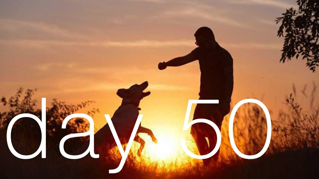 Day 50 - We Have To Become Like Obedient Dogs